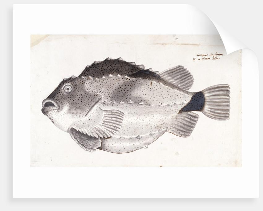 Lumpfish by Henry Hunt
