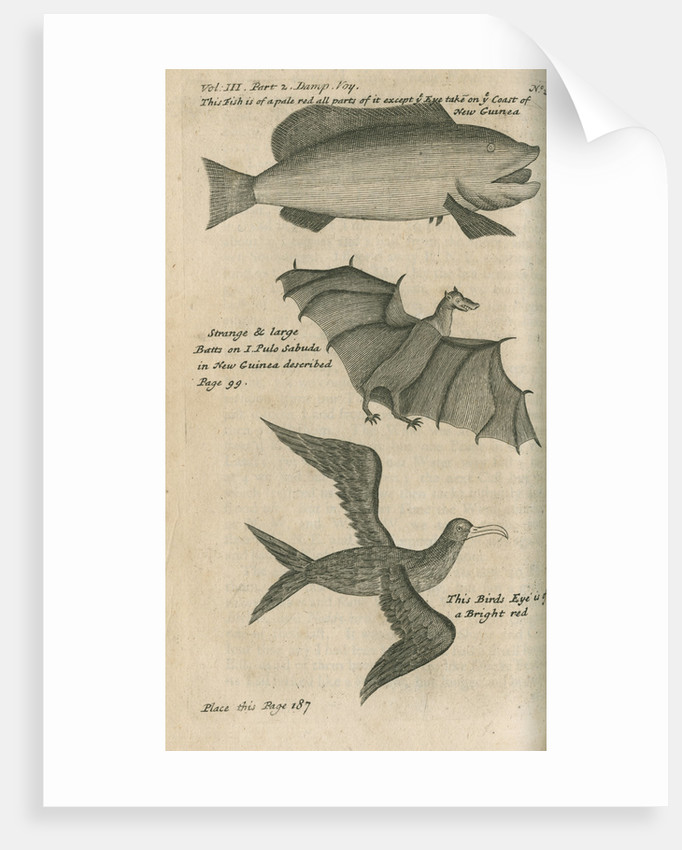 Animals of New Guinea observed by William Dampier (1651-1715) by Anonymous