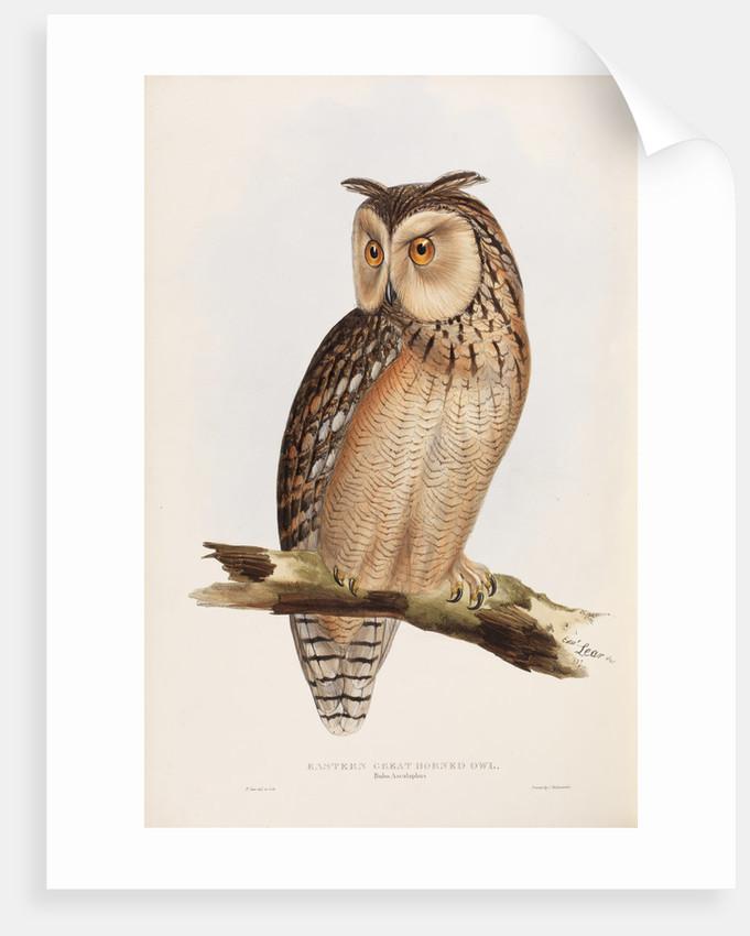 Eastern Great Horned Owl by Edward Lear