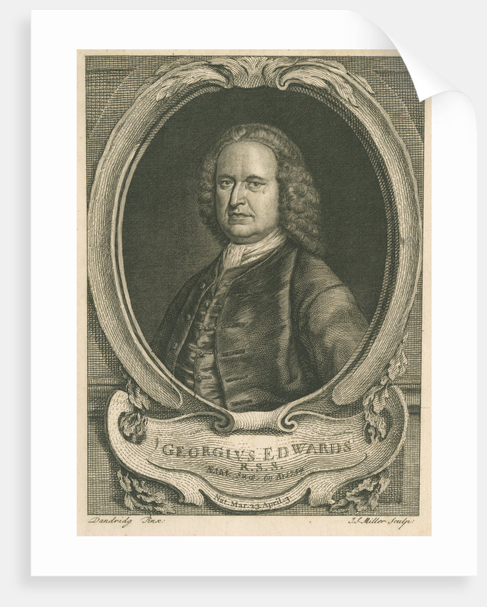 Portrait of George Edwards (1694-1773) by Johann Sebastian Müller