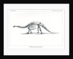 'Brontosaurus excelsius' by unknown
