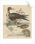 'The Man of War Bird, the Chinese Fish, &c.' by George Edwards