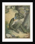 'The Maimon' [Mandrill] by James Sowerby
