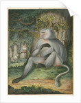 'The Grey Baboon' [Barbary macaque] by James Sowerby