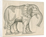 'Figure d'un Elephant' by Anonymous