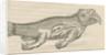 'Figure d'un Elephant de Mer' by Anonymous