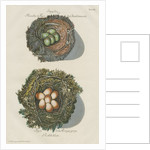 Nests of the Goldfinch and the Robin by Adam Ludwig Wirsing
