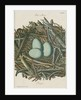 Nest of the Grey heron by Adam Ludwig Wirsing
