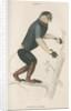 'Lasiopyga nemea' [Douc monkey] by William Home Lizars