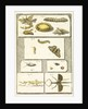 Studies of the silk worm and other insects by T Cole