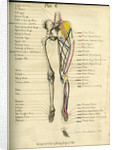 Muscle distribution of the lower body (front) by Joseph Constantine Carpue