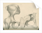 Hip bone and a portion of the femur by J Perry
