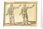 Proportions of a man (back view) by unknown