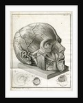 Human head and diagrams of the eye by Faustino Anderloni