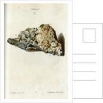 'Argentum' (silver) by Johann Michael Seligmann