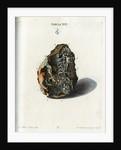 Tin Crystals by Johann Michael Seligmann