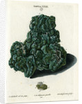 Crystalline Green Copper by Johann Sebastian Leitner