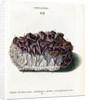 Quartz with Amethyst Crystals by Johann Sebastian Leitner
