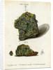 Green mineral of lead by Johann Sebastian Leitner