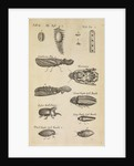 Insects in the Royal Society's Repository by Anonymous