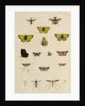 Insects of northern Canada by Anonymous