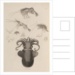 Marine invertebrates of the Arctic seas by unknown