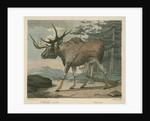 'The Elk' by William Skelton