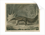 'The Great Ant-Eater' by William Skelton