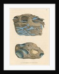 'Ferrum caeruleum' by James Sowerby