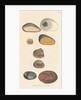 'Silex quartzum' by James Sowerby