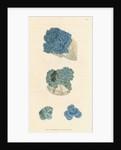 'Cuprum carbonatum' by James Sowerby