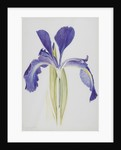 English Iris by Arthur Harry Church