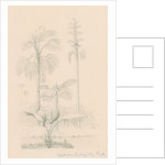 Vegetation sketch by Richard Spruce