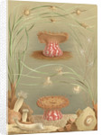 'Ragactis, Anemonia, Aiptasia…' [Sea anemones] by Werner & Winter GmbH