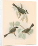 Studies of three birds by unknown