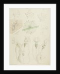 Collotheca rotifers by Charles Thomas Hudson