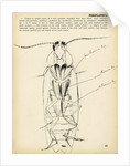 Periplaneta orientalis by Henry Hallett Dale