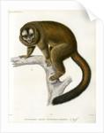 Night monkey by Borromée