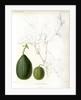 Cucumis hybrids by Debray