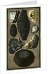 Rock specimens by Pietro Fabris
