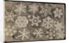 'Figures observ'd in snow' by Robert Hooke