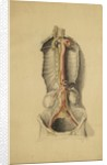 Anatomical study of the thoracic duct by Thomas Bonnor