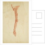 Anatomical study of arm and hand by Andreas van Rymsdyk