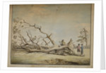 Storm-felled tree near Roehampton by Edward Edwards