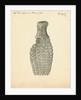 Fossilised Ichthyosaur paddle by William Clift