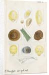 Aspidiotus cyanophyll [Cyanophyllum scale] and Aspidiotus dictyospermi [Spanish red scale] by Robert Newstead