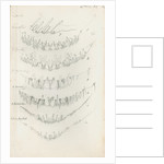 Posterior body margins of female Aspidiotus by Robert Newstead