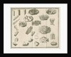 Microscopical observations of crystals from Linnaeus's 'Academic delights' by Anonymous
