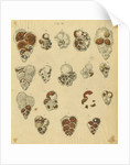 'Red sand, yellow sand & brown sand of the yellow chalk' [specimens of foraminifera] by Henry Bowman Brady