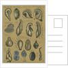Seventeen specimens of foraminifera by Henry Bowman Brady